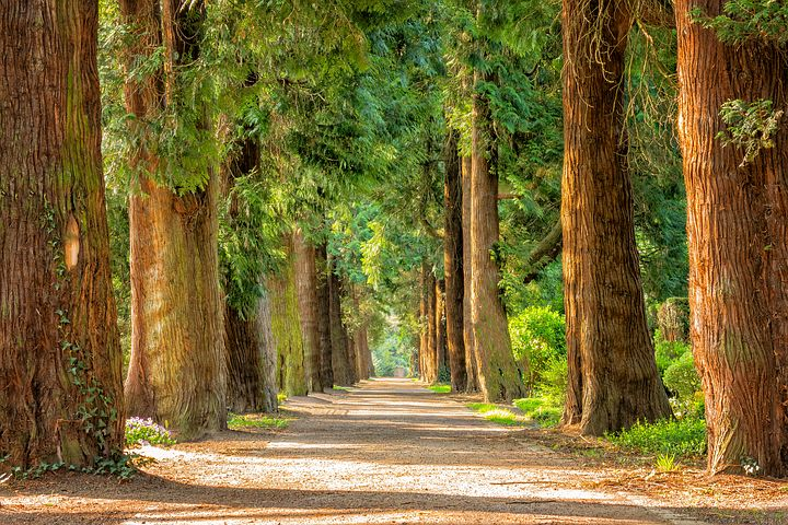 Find Out About The Wellness Of Your Trees With A Certified Arborist Report