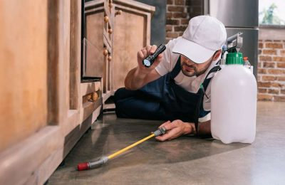 Signs You Need Pest Control In Melbourne